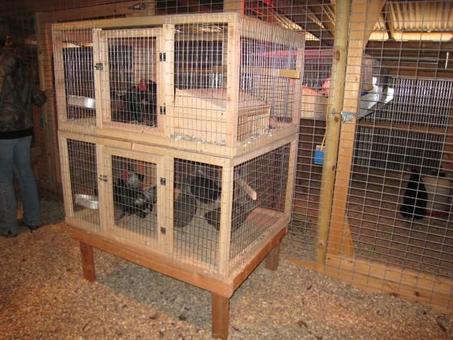 Pen Sizes For Bantam Pairs And Trios Chickens Poultry
