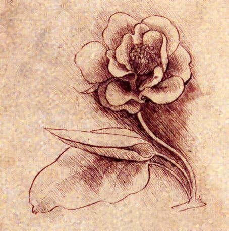 This is a drawing by Leonardo da Vinci. Leonardo is one of most men who were born on our planet. Well, this is one of my favorite drawings. Delicate, perfect and beautiful .. Profoundly beautiful. My gift to all who are here in this group. I take this opportunity to thank the invitation. Hope you like it.