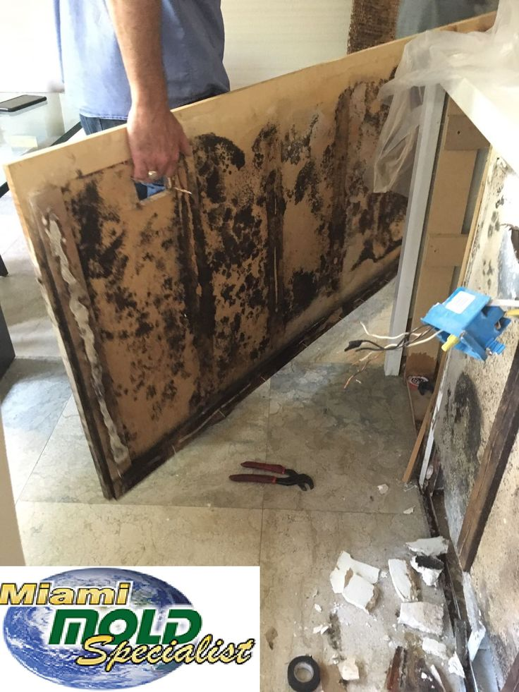 Professional mold removal in Miami and Fort Lauderdale. Over 20 yrs experience and a 12 yr. Warranty. Licensed by the State of Florida! We offer the best in mold remediation and mold removal services in #MiamiBeach