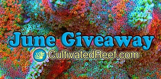 Coral Reef Aquarium - CR Contests - June Free Giveaway - CultivatedReefs.com: Reef Tanks, Reef Aquarium, Cr Contests, June Free, Cultivatedreefs Com, Coral Reefs