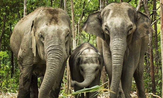 It's common knowledge that elephants in Thailand are often abused and tortured for human gain. These responsible elephant experiences swerve well away from these practices, offering a natural way to g