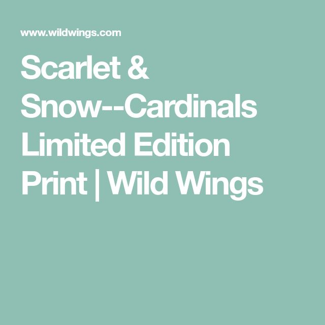 Scarlet & Snow--Cardinals Limited Edition Print | Wild Wings