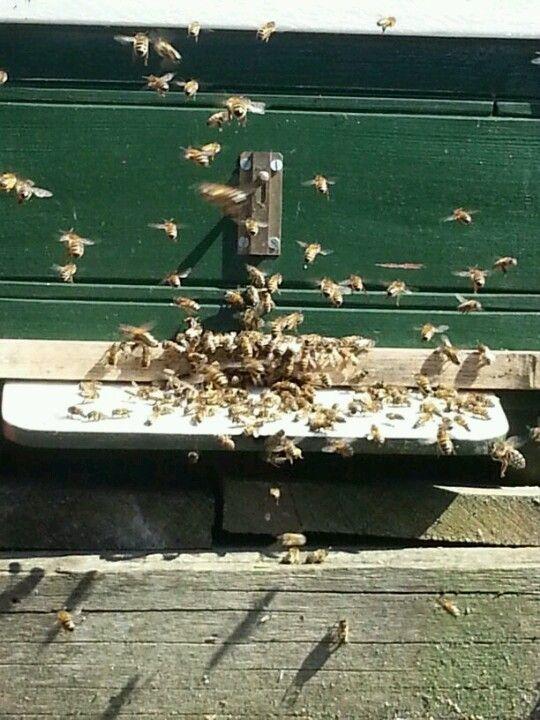 Bijen met balkje om de warmte vast te houden in de kast