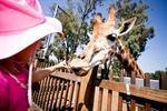 Taronga Western Plains Zoo, Dubbo, NSW Australia