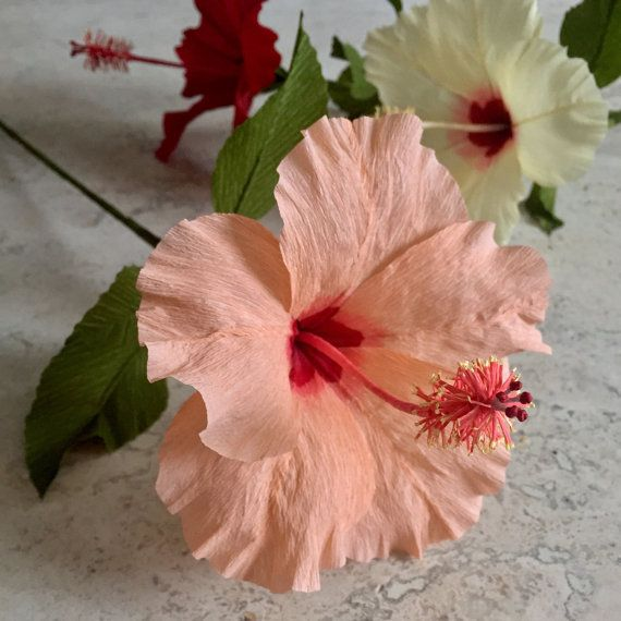 This single stem crepe paper hibiscus is highly detailed and realistic. This beautiful bloom never requires water and can add a splash of color and elegance to your home or office, at your wedding, or simply wherever you care to enjoy it. Every piece is handcrafted and will be one-of-a-kind. Each bloom is approximately 5 1/2 in diameter and is on an 18 wire stem. The stem can be cut or bent to fit in any vase you desire. The price of shipping is based on the number of blooms purchased. Up…
