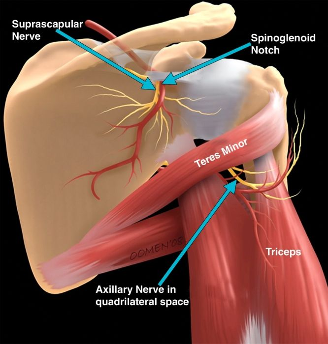 Suprascapular nerve and shoulder pain, Unidad Especializada en Ortopedia y Traumatologia www.unidadortopedia.com PBX: 6923370 Bogotá, Colombia.