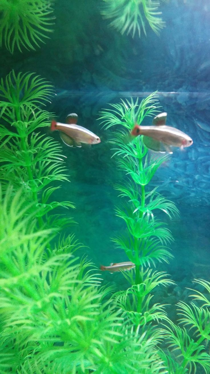 We have in stock frozen salted minnows year round - White Cloud Mountain Minnow