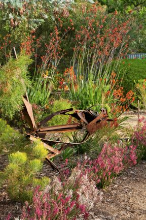 Ironwork bird sculpture manages to look dainty amongst the kangaroo paws. Drought-tolerant garden