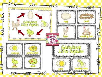 Apples and ABCs: Simple Life Cycle of a Chicken Unit