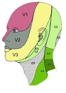 névralgie d'arnold Généralement la douleur n'apparaitra que d'un seul côté au niveau de votre nuque, et vous lancera jusqu'au dessus de votre oreille, sur le même côté.  Sur le schéma ci dessous, la zone douloureuse correspond grossièrement à la zone verte