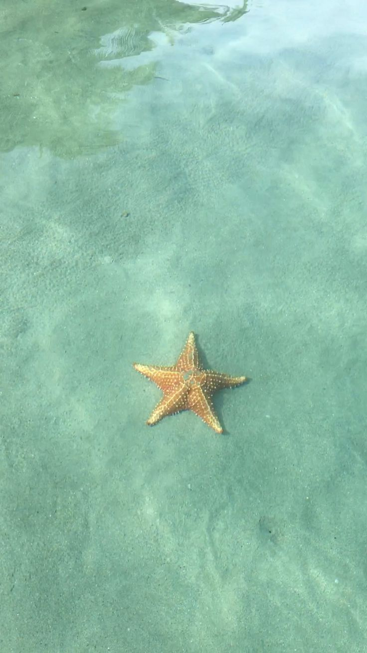 Starfish beach at Bocas Del Toro
