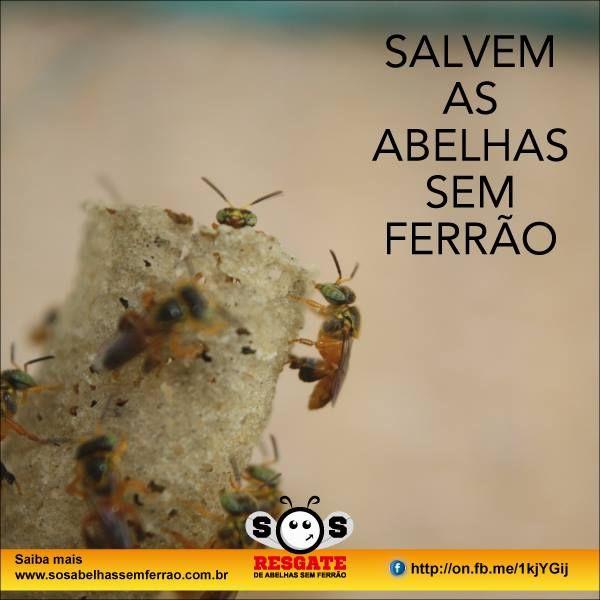 PESSOAL ALTAMENTE QUALIFICADO NA PROTEÇÃO DAS ABELHAS SEM FERRÃO  https://www.facebook.com/groups/sosabelhassemferrao/