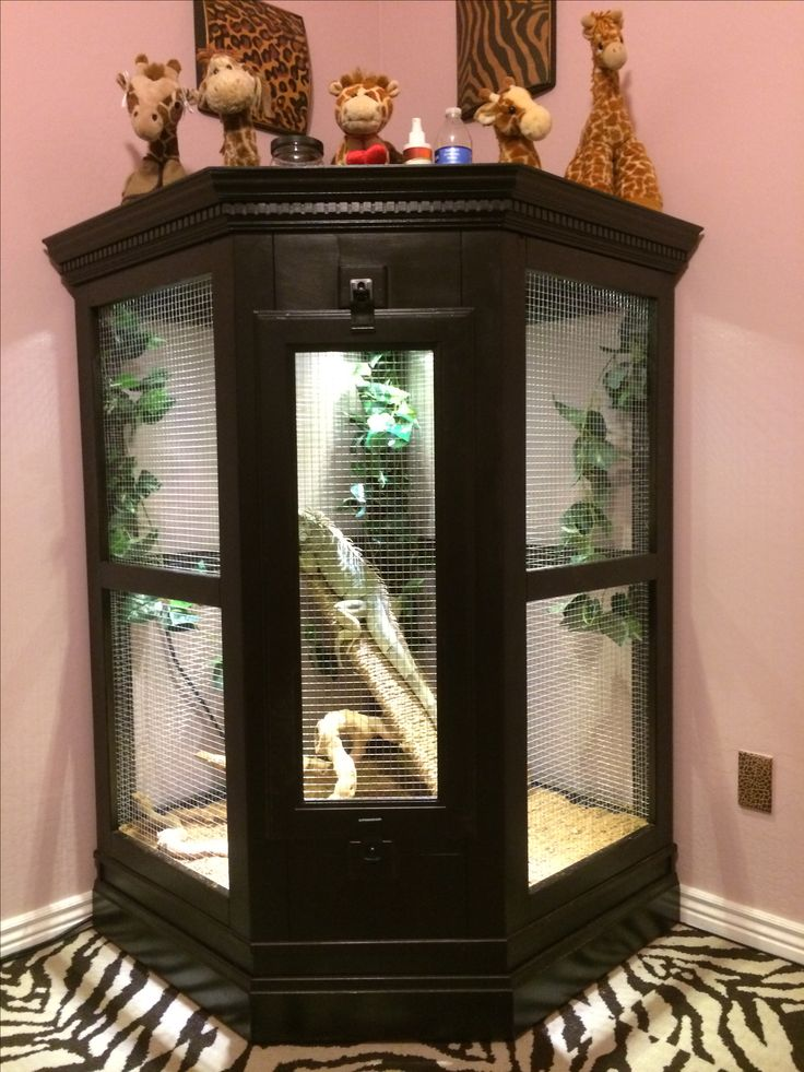 25 best ideas about iguana cage on pinterest snake terrarium reptile enclosure and reptile cage. Black Bedroom Furniture Sets. Home Design Ideas