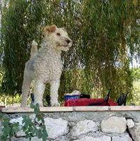 FINGE Type : Fox Terrier Sexe : Femelle Age : Adulte Couleur : Gris et blanc Taille : Moyen Lieu : Haute-Garonne - 31 (Midi-Pyrénées) Refuge : Refuge CAPUCINE (Haute-Garonne) Tél : 05 61 87 28 11 4 ANS