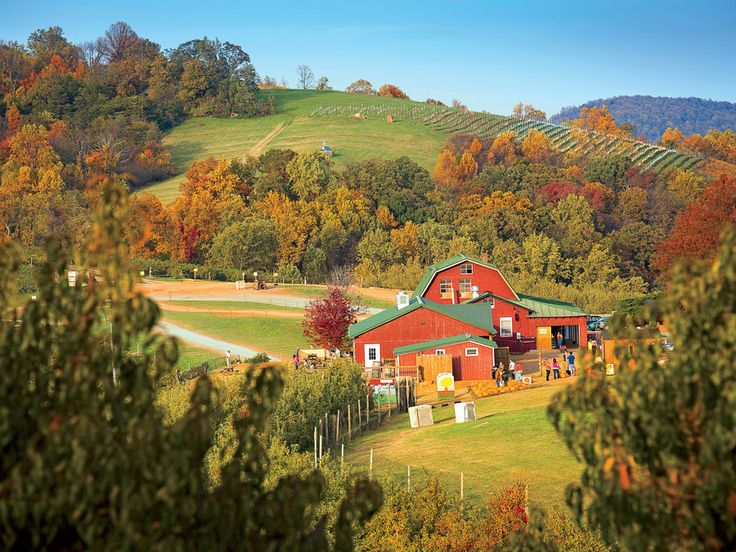 Apple Country Road Trip in Virginia \ Carter Mountain Orchard