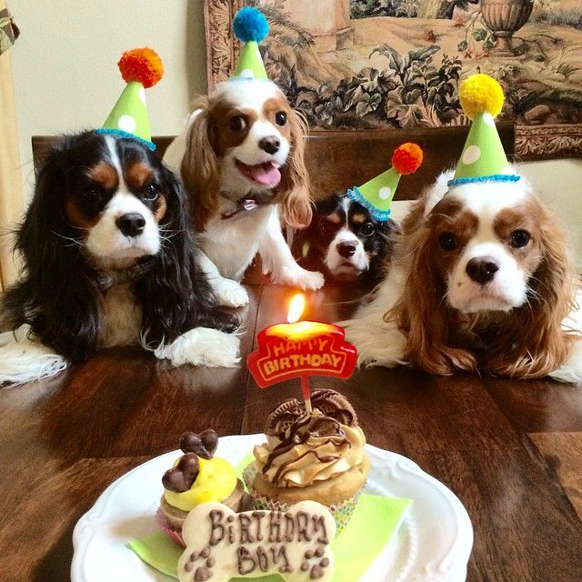 Happy Birthday Puppy Royalty Free Stock Photo - Image: 35008405