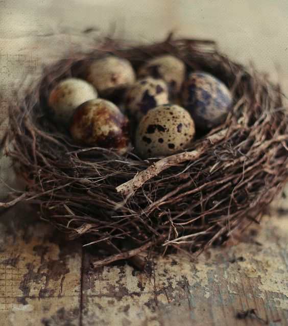 Isn't it amazing how birds seek,find,and fashion their nests together!? And then look at those beautiful eggs!!