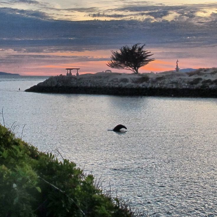 A walk along the path & a sea lion jumping in the water, Ventura Harbor Patrol, Ventura, CA, - Images by Suny Oberto