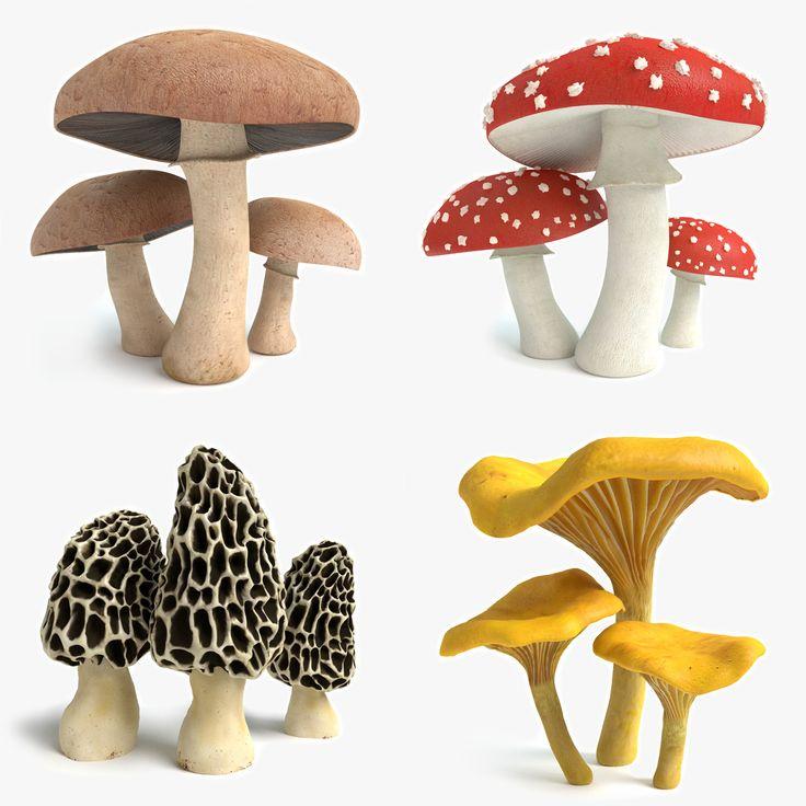 Set Mushrooms 3D Model - 3D Model