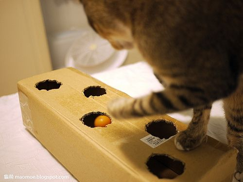 Fun for cats! I cut circles in a small, shallow box, put their toys & a little catnip for Pookie & Maggie. A 'free' toy! We call it their 'busy box'=^..^=