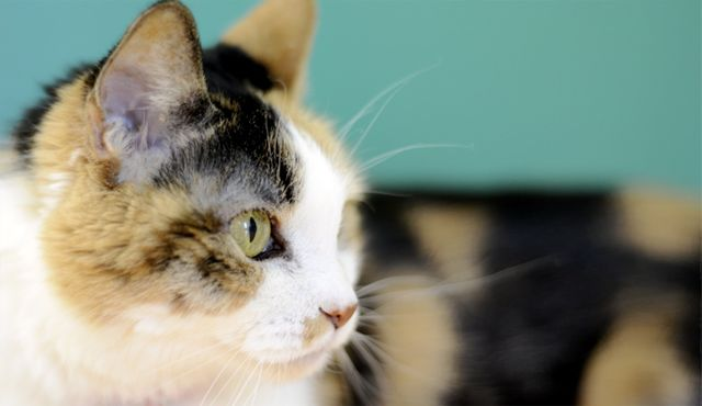 If you wish to make an in-kind donation of goods to Cat Care Society, we can always use the following:  Canned Cat and Kitten Food Dry Cat Food: Purina Kitten Chow, Baby Food: Turkey and Chicken, Clay (NON-Clumping) Cat Litter, Small Paper Plates, L-Lysine Powder or Capsules (helps kittens' immune systems), Bleach, Trash Bags (13 and 20 gallon sizes), Automatic Dish Washing Detergent, Paper Towels, Rubber-backed rugs, Hooded cat beds.