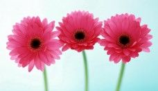 all about HD wallpaper flowers