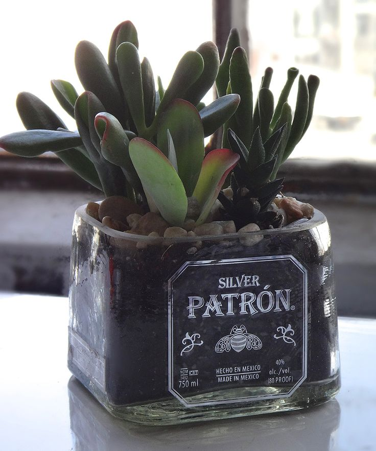 'Patron' Tequila Bottle Bowl