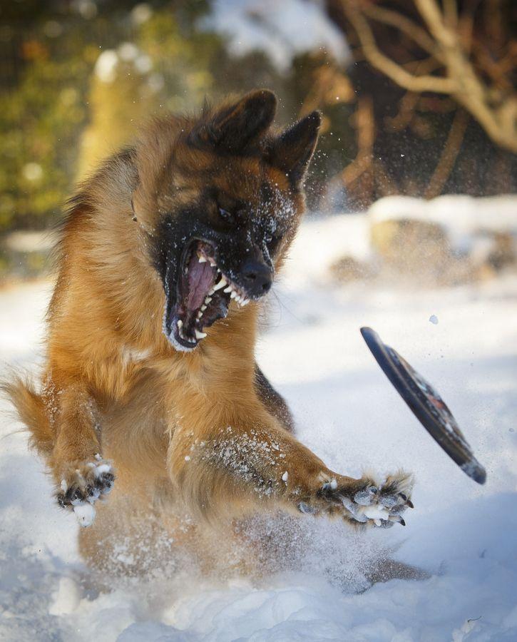 Snow time fun by Kristin Castenschiold