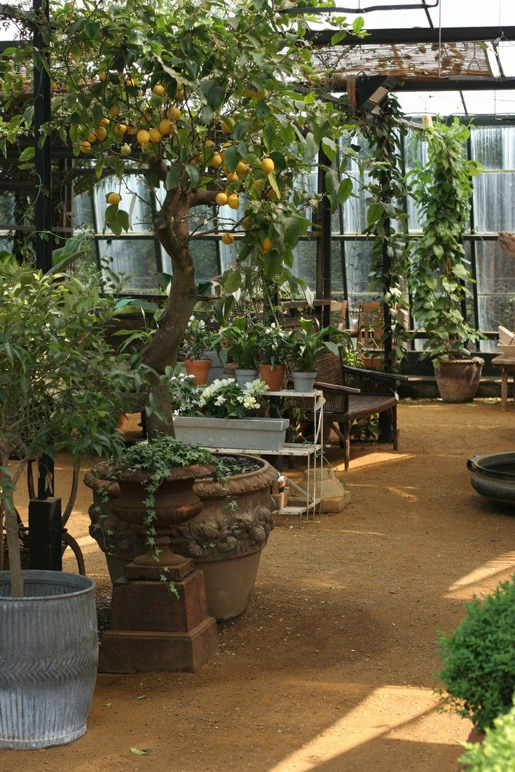 Fruit tree in Petersham Nurseries
