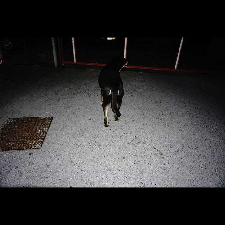 Untitled #skantzman #colour #dog #flash #manolisskantzakis #photography #stray dog #crete #heraklion