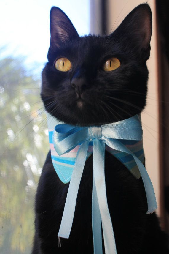 Sea Waves Cat Collar Accessory with Ribbon Bow