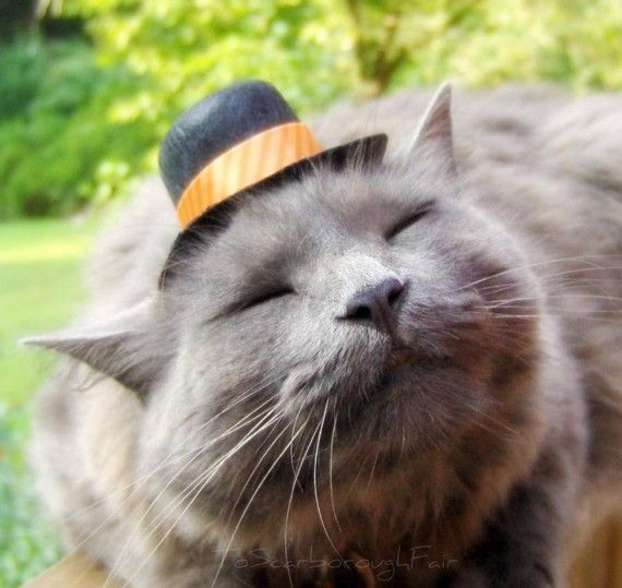 Catsville Blog