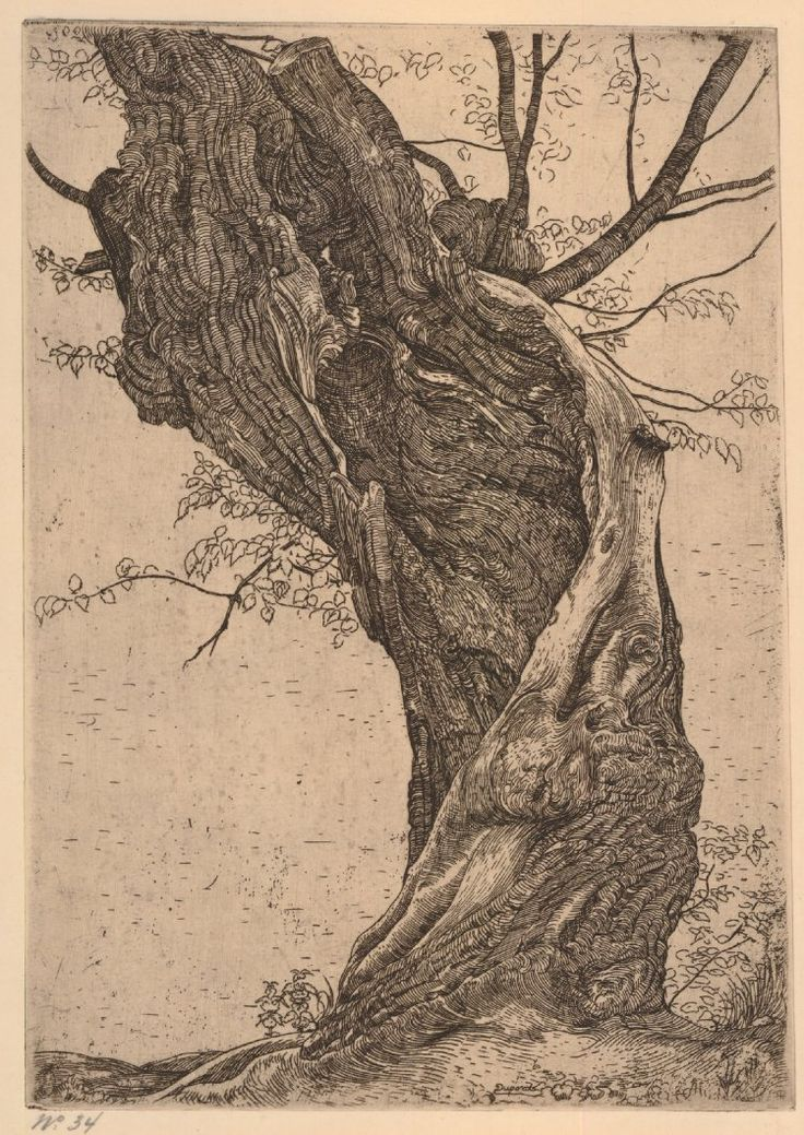 Pieter Dupont, A large twisted hollow willow, 1890-1911, Etching with plate tone and surface tone