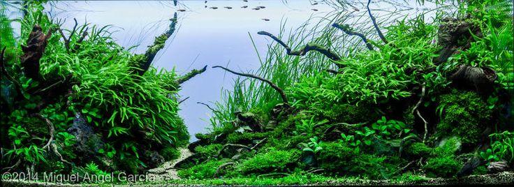 2014 AGA Aquascaping Contest - Entry #427