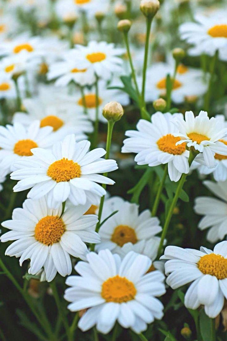 best garden images on pinterest container flowers garden