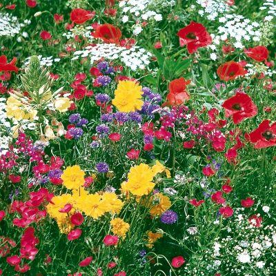 Les 17 meilleures images concernant pour le jardin id es d 39 achats sur p - Gravillon blanc castorama ...