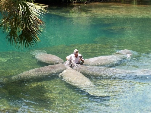 Homosassa Springs, Florida -feeding the manatees. They can live in both fresh water & salt water...wonderful creatures.