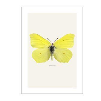 Dekorera din vägg med en av Göran Liljebergs underbara fotoillustrationer! Göran Liljeberg är en skicklig fotograf med ett speciellt intresse för makrofotografering. Han har också en stor passion för fjärilar och insekter vilket har resulterat i en serie vackra prints som han trycker i sin egen studio. Varje tryck är detaljrikt, skarpt och har en bred färgpalett. Välj mellan många olika varianter!