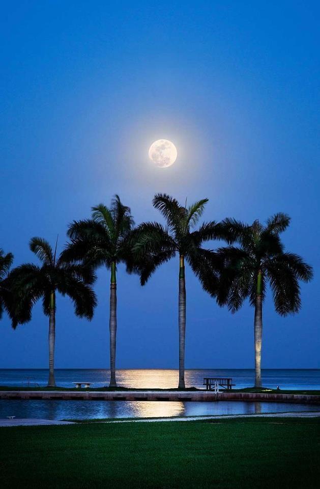 Best 25 Florida Palm Trees Ideas On Pinterest Tropical