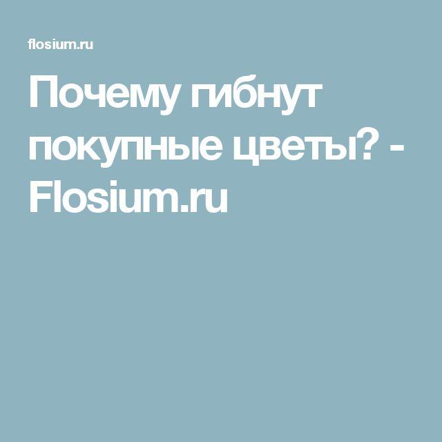 Почему гибнут покупные цветы? - Flosium.ru