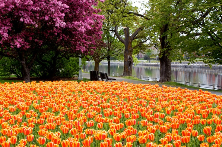 Spring Colours on the Canal  Rideau Canal, Ottawa, Ontario, Canada  #KitSpringComp