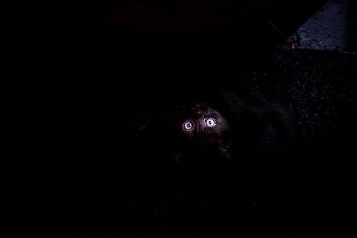 Είναι θέμα οπτικής... Άλλοι θα μείνουν στη μαύρη γάτα... Άλλοι θα λατρέψουν τα λαμπερά της μάτια #arive #photo #20_09_13 www.arive.gr/photos.html