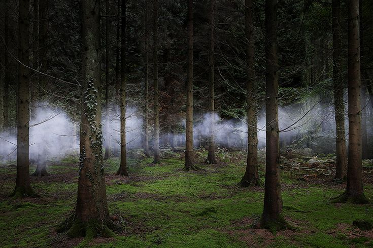 Ellie Davies: Between The Trees 1, 2013