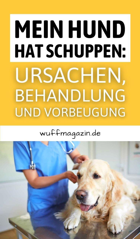 Mein Hund hat Schuppen: Ursachen, Behandlung und