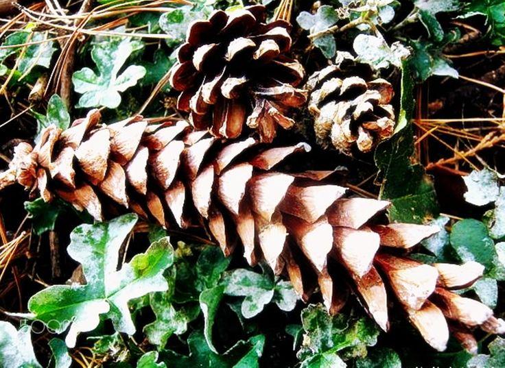 silk flower pine - null