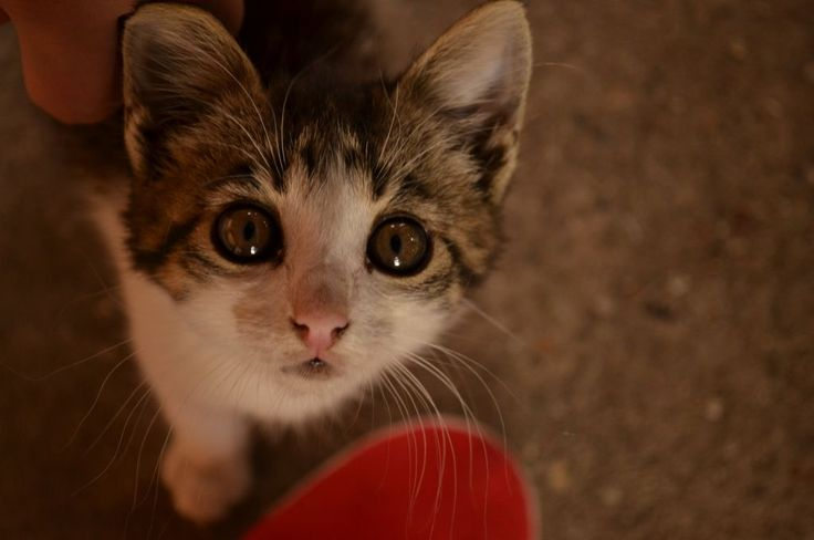 Little cutie with adorable eyes!