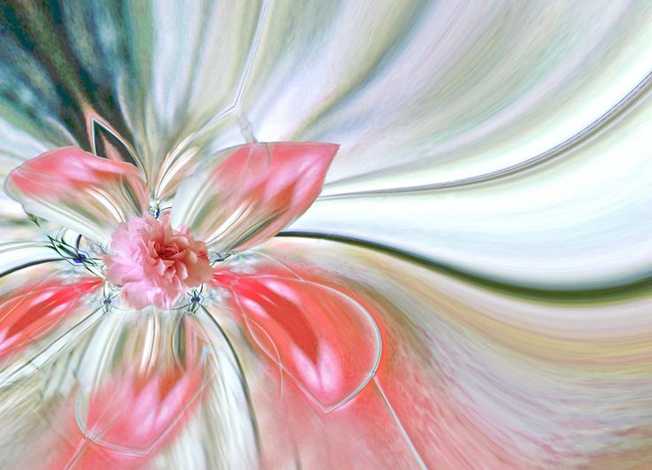 PRETTY IN PINK BY TATIANA LOPATINA. TO SEE MORE AMAZING IMAGES VISIT OUR WEBSITE www.lailas.com