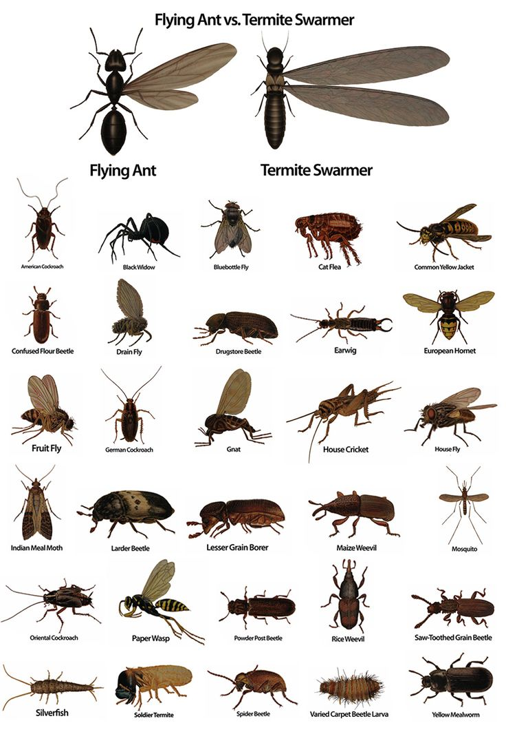 weather approaching in April and May  here is a quick infographic on  how to tell if you ve got a swarm of termites or another type of pesky  insect at. 70 best Termites images on Pinterest   Termite swarm  Engineering