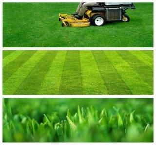 Fall lawn care for a strong spring grass