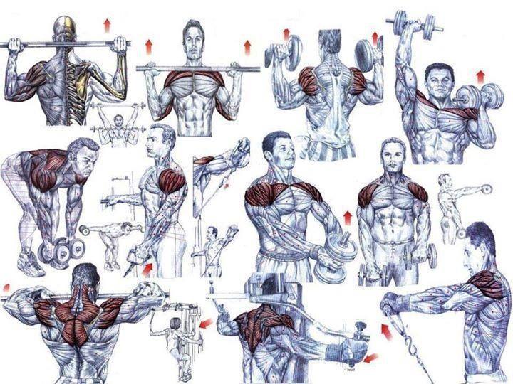 Great shoulder workout!
